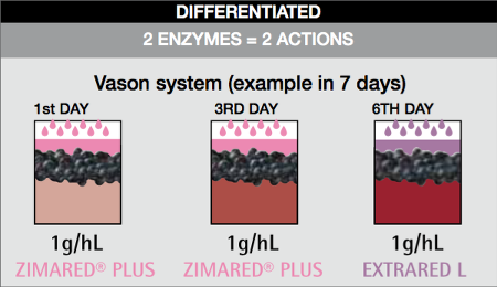 enzyme extration procedure - Differentiation